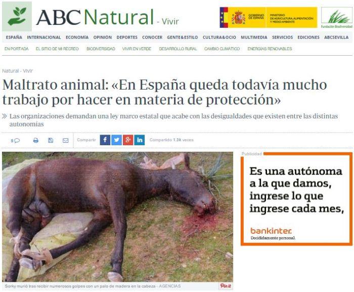 Notícia de l'ABC on s'utilitza la imatge d'un cavall mort i en descomposició per parlar del nou marc estatal que demanen les associacions animalistes